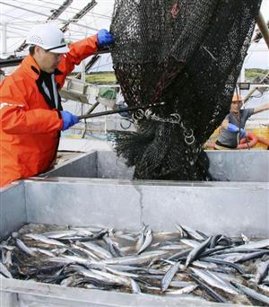 漁獲 量 イワシ