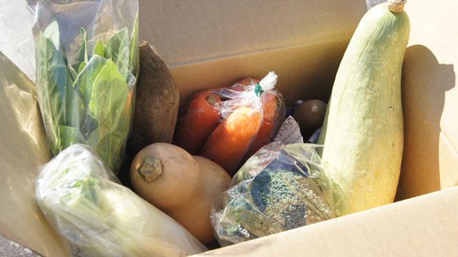 食べチョクの野菜セット内容例